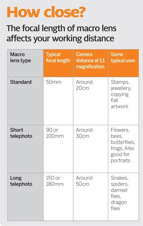 Description: The focal length of macro lens affects your working distance