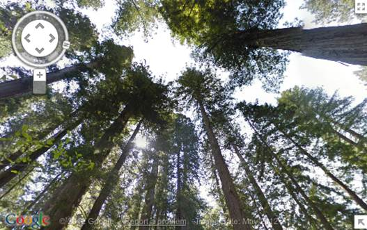 Description: If you can't explore California's national parks in person this summer, explore them from home with Street View